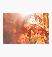 autumn leaves with sun flare Photographic Print