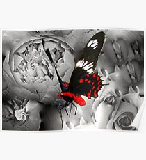 Butterfly Surreal Poster