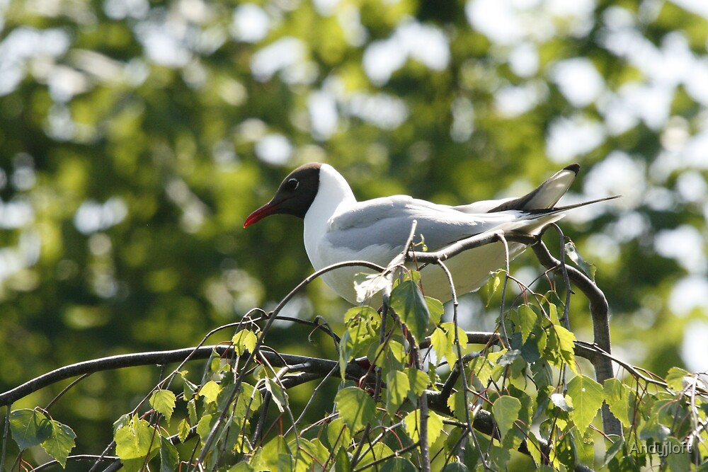 Seagull in tree by Andyjloft