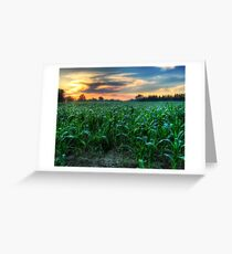 Michigan Fields of Corn Greeting Card
