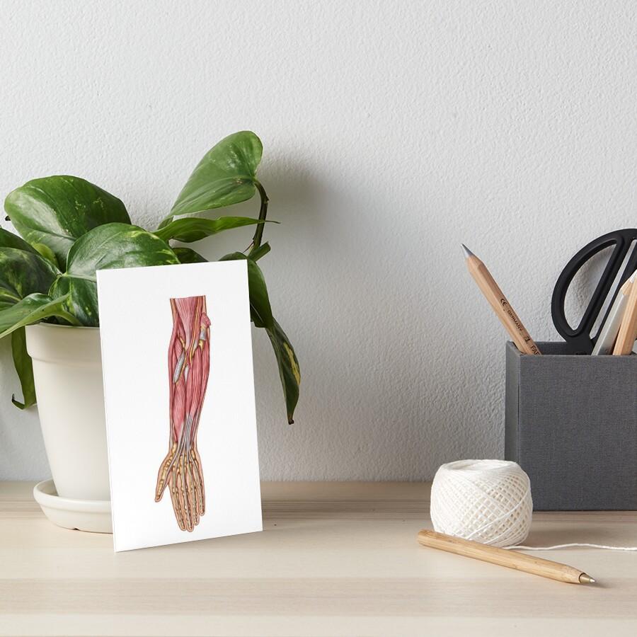 Láminas de exposición «Anatomía de los músculos humanos del ...