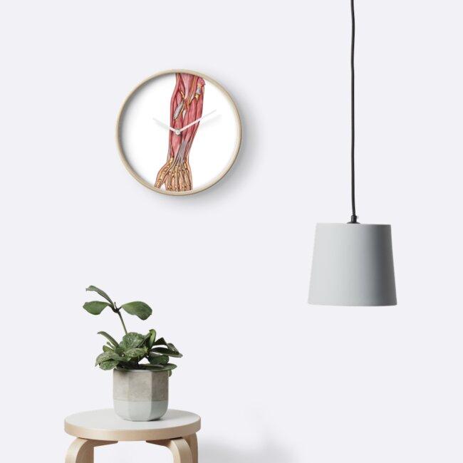 Relojes «Anatomía de los músculos humanos del antebrazo, vista ...