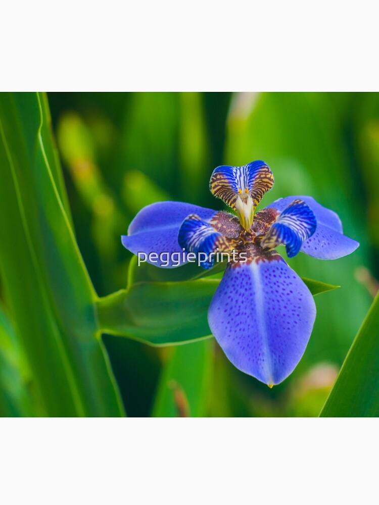 Dutch Iris by peggieprints