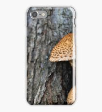 Toadstool in the rainy woods iPhone Case/Skin