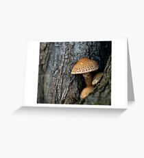 Toadstool in the rainy woods Greeting Card