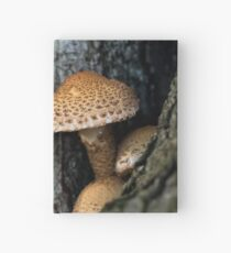 Toadstool in the rainy woods Hardcover Journal