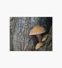 Toadstool in the rainy woods Art Board