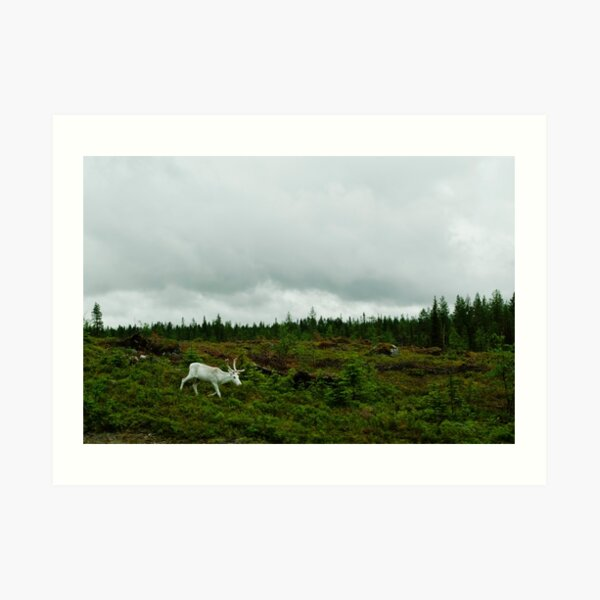 The White Reindeer Art Print