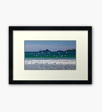 Terns take flight  Framed Print