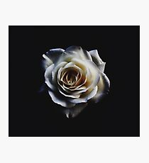 Classic white rose Photographic Print