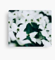 White elegant floral Canvas Print