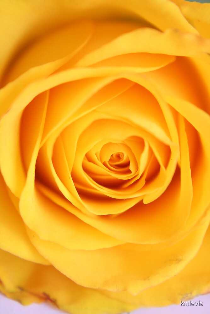 Yellow rose by kmlevis