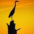 Heron Silhouette At Sunset by Amy Jackson