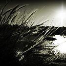 Piercing the sun.. by Lee Burgess