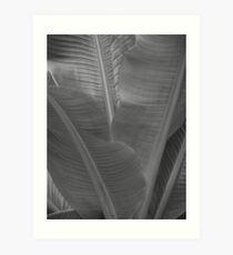 Palm in Adelaide Botanic Gardens Art Print