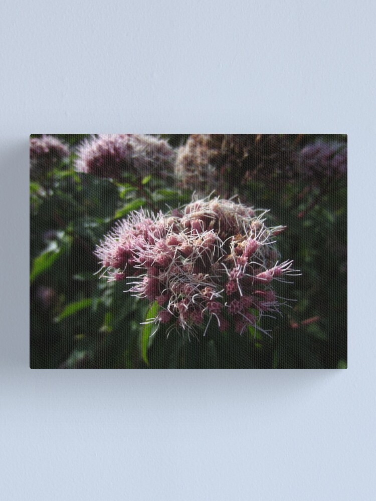 Alternate view of Hemp agrimony Canvas Print
