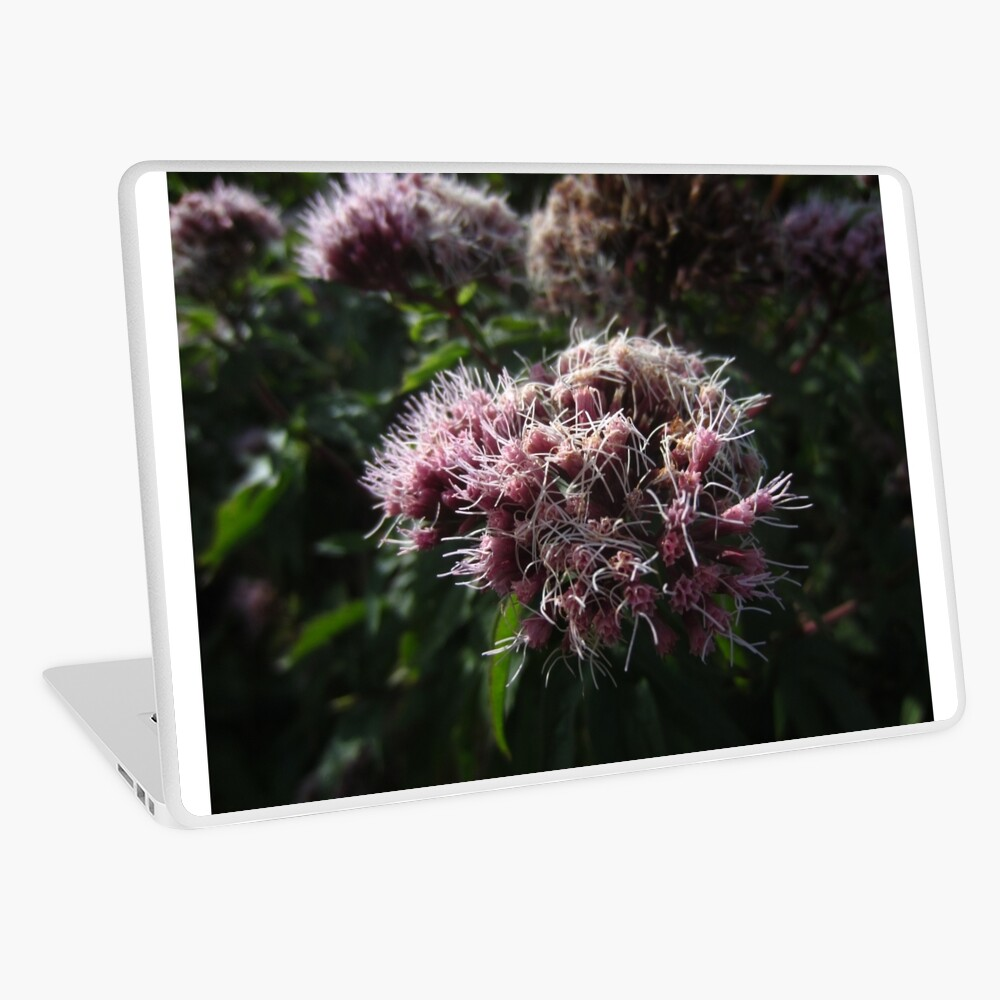 Hemp agrimony Laptop Skin