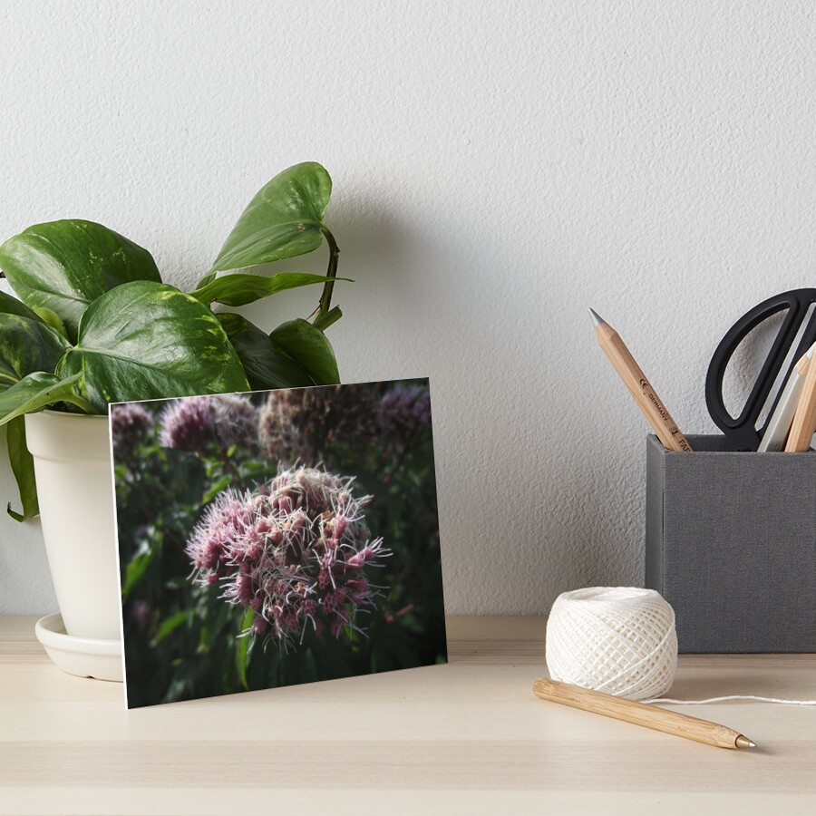 Hemp agrimony Art Board Print