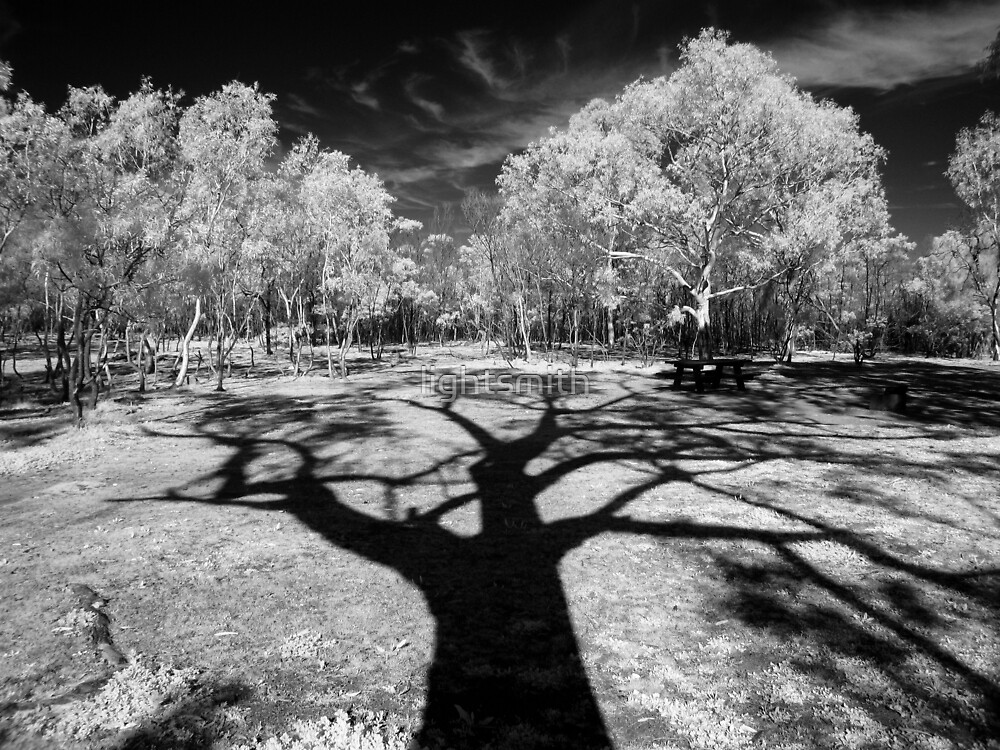 Shadow Tree One by lightsmith