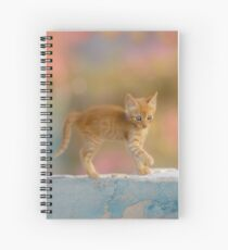 Cute Funny Drolly Ginger Cat Kitten Spiral Notebook