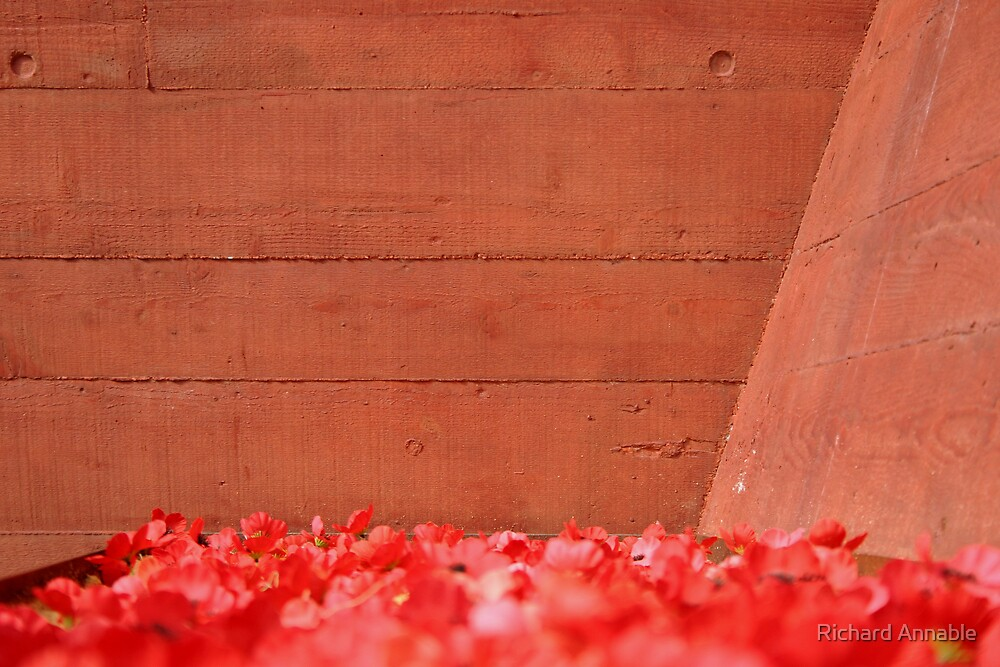 Sea of poppies by Richard Annable