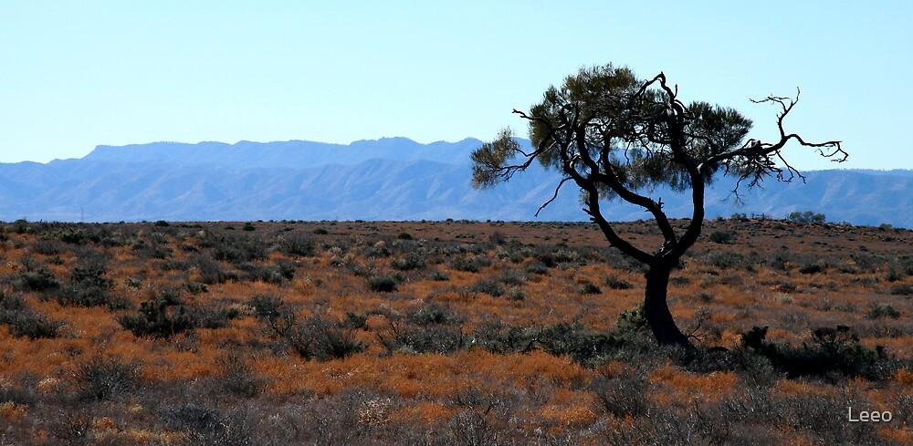 The Southern Flinders Rangers  by Leeo