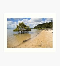 Mangrove in the sea Art Print