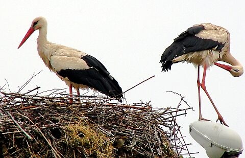 Spring birds by fotokrust