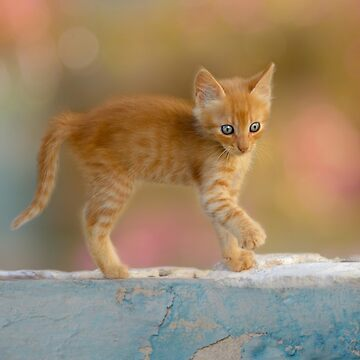 Cute Funny Drolly Ginger Cat Kitten by kathom