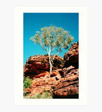 Outback Tree Art Print