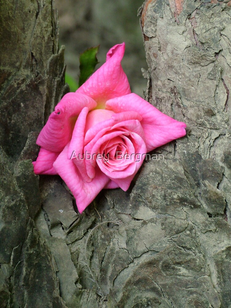 The rose by Aubrey  Bergman