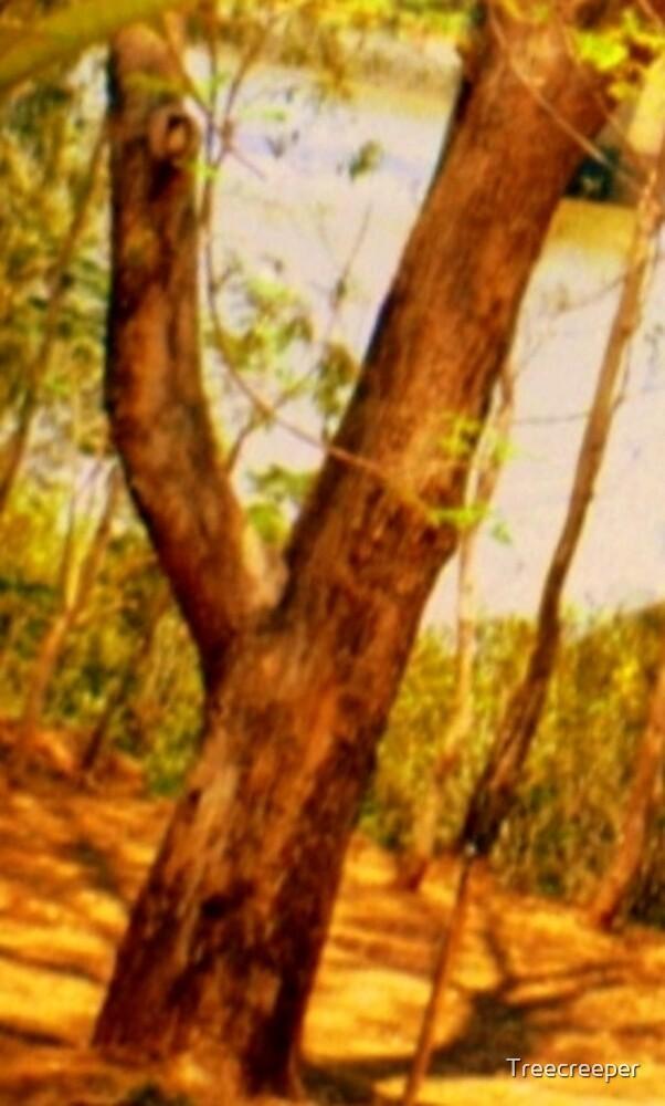 Y by Treecreeper