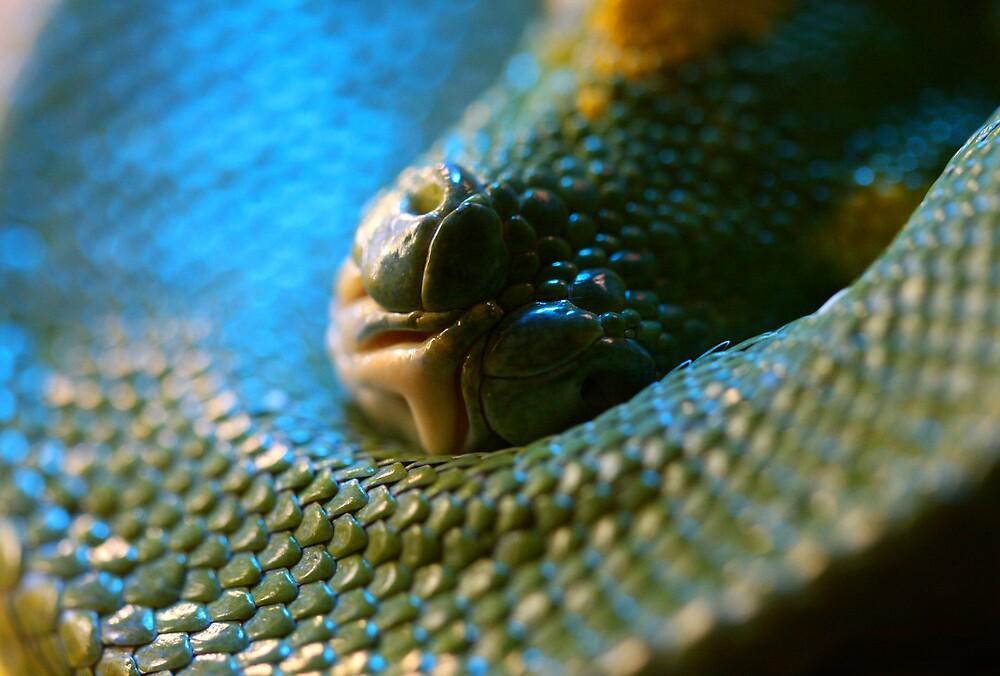 Snake Nostrils by Gavan  Mitchell