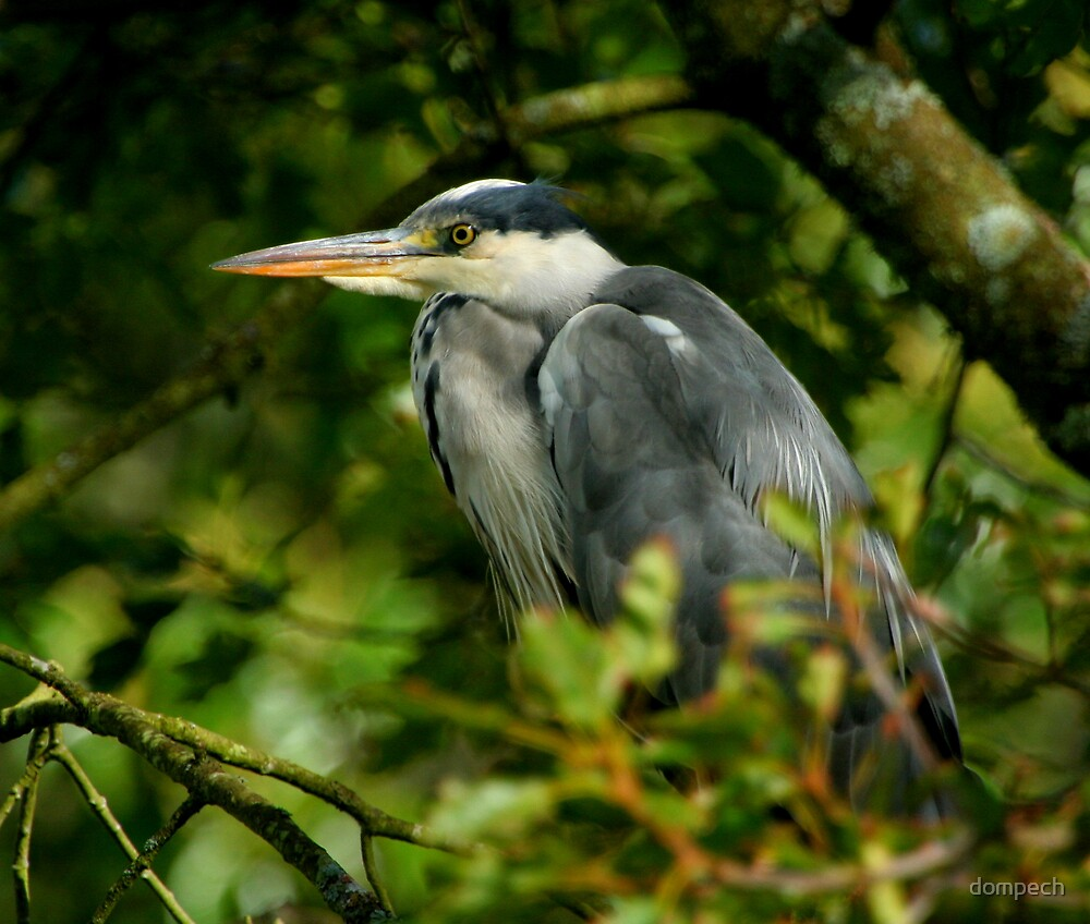 Heron by dompech