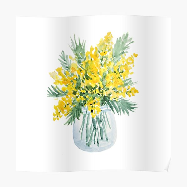 Yellow mimosa flowers bouquet watercolor painting Poster