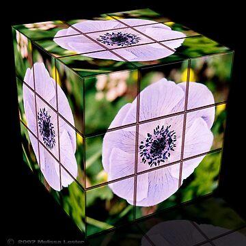 Flower Cube-it by Artress