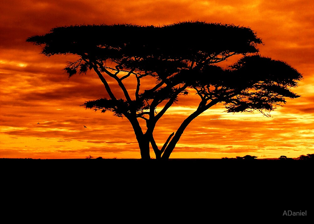 Sunset over the Serengeti by ADaniel