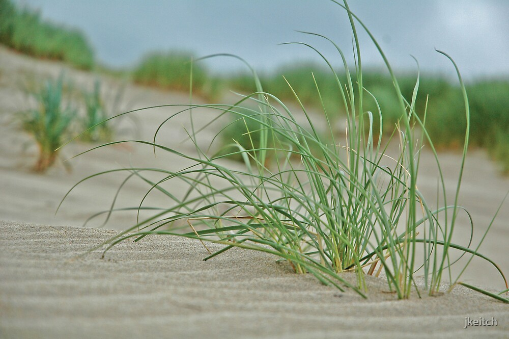 Dune Grass by jkeitch