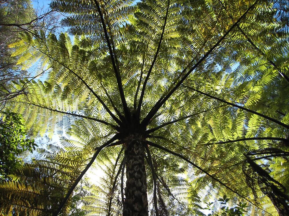 Ferns, New Zealand by gaylebaird