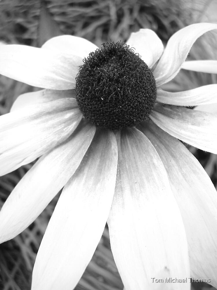 Flower Power 2 by Tom Michael Thomas