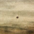 Sandscape by David Librach - DL Photography -