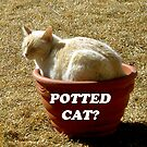 Potted Cat? by Ruth Palmer