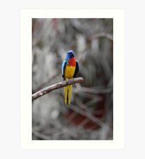 Bird On A Branch  Art Print