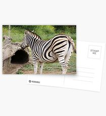 Zebra Postcards