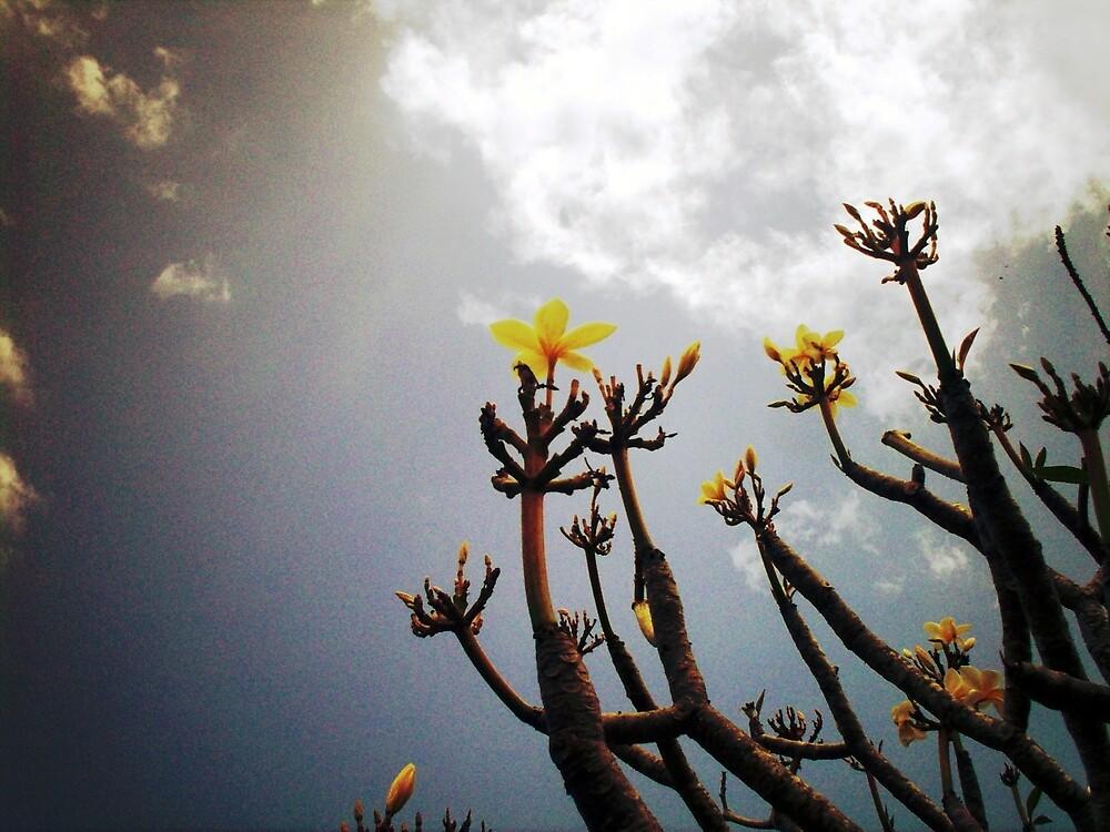 Frangipani Flowers by LastLittleBird
