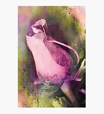 The beauty of a Rose Photographic Print