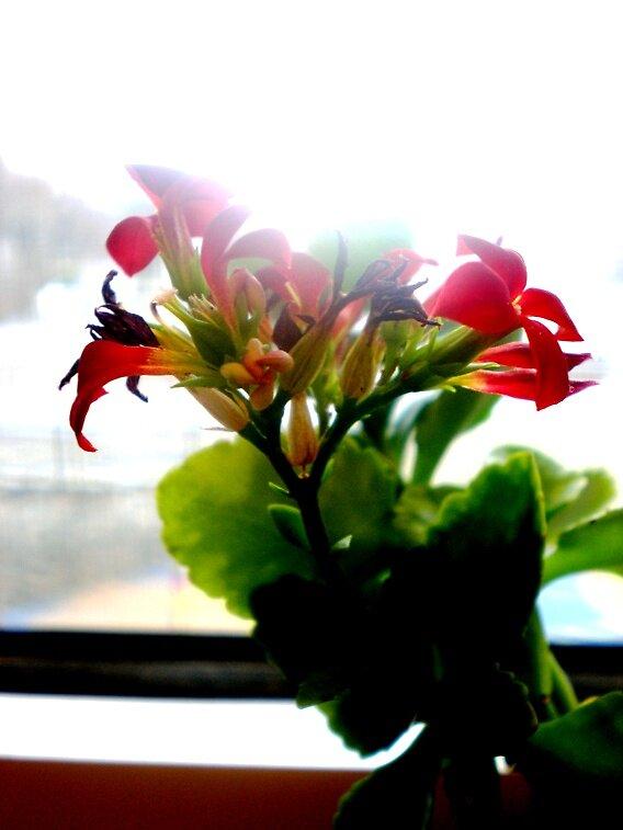 Flower 1 by megabetic