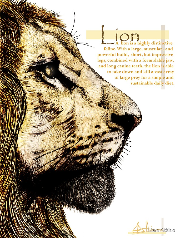 Lion + Text by Liam Atkins
