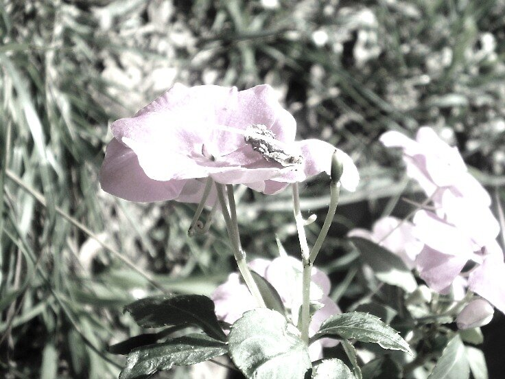 Flower 2 by megabetic