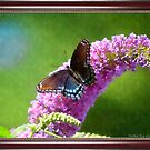 Red-Spotted Purple - Watercolor Effect by Deb  Badt-Covell